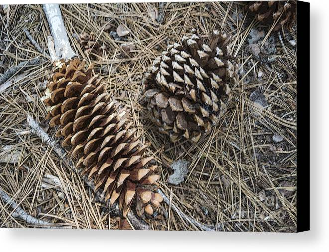 Pine Cones Canvas Print featuring the photograph Sequoia Pine Cones by Ruth H Curtis