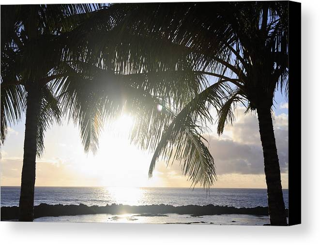 Background Canvas Print featuring the photograph Sharks Cove Sunset by Brandon Tabiolo