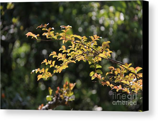 Leaves Canvas Print featuring the photograph Shine On Me by Yumi Johnson