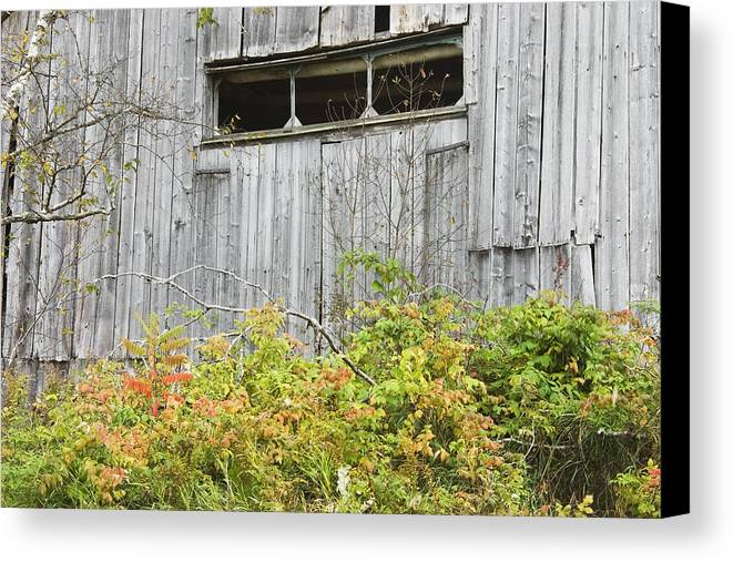 Building; Old; Old Building; Abandoned; Run-down; Architecture; Shed; Shack; Grunge; Structure; Window; Fall; Autumn; Weathered; Overgrown; Weeds; Country; Building Exterior; Rural; Rustic; Grass; Overcast; Wood; Siding; Maine; New England; Old Barn In Maine; Maine Barns; Old Barn; Weather Wood; Wooden Siding; Fall Foliage; Abandoned Building; Rustic; Rusctic Building; Maine Countryside; Country Living; Weathered Building; New England Barn Canvas Print featuring the photograph Side Of Barn In Fall by Keith Webber Jr