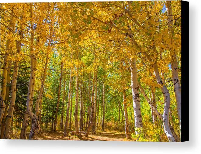 Landscape Canvas Print featuring the photograph Sierra Aspen by Marc Crumpler