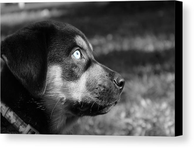 Puppy Canvas Print featuring the photograph Sight by Airestudios Photography