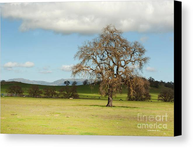 Landscape Photography Canvas Print featuring the photograph Silicon Valley Hills by Artist and Photographer Laura Wrede