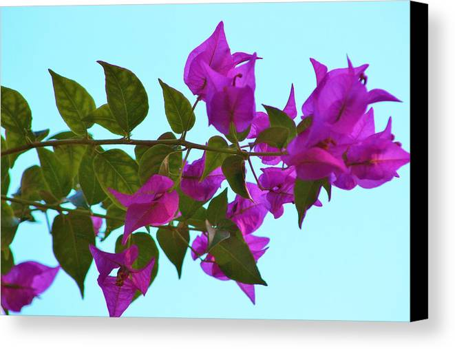 Canvas Print featuring the photograph Simple Elegance by Janice Vaughn