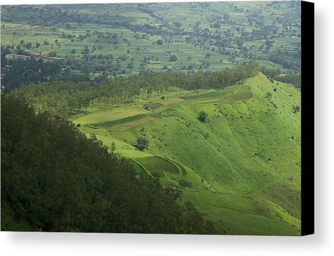 Gamut Canvas Print featuring the photograph Skc 3566 The Gamut Of Green by Sunil Kapadia