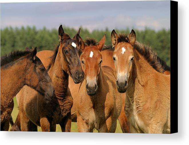 Horse Canvas Print featuring the photograph Smile by Szalonaisa Photography