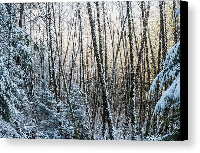 Snow Canvas Print featuring the photograph Snow Falls On The Alders Astoria by Robert L. Potts