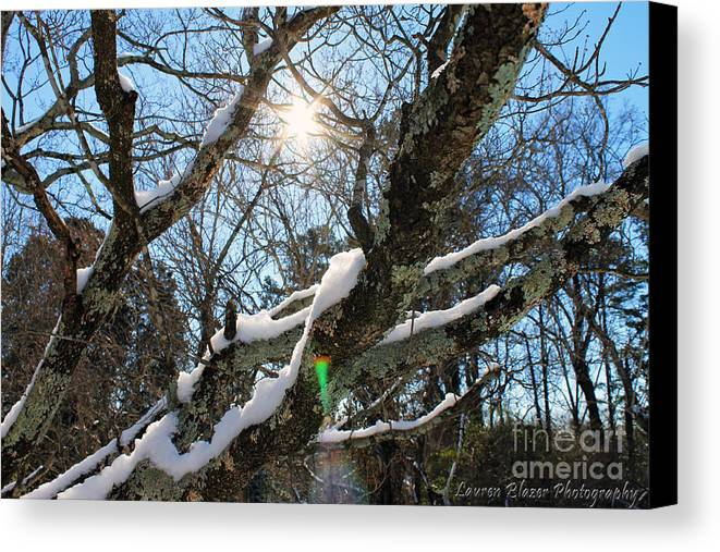 Tree Canvas Print featuring the photograph Snowglow by Lauren Blazer