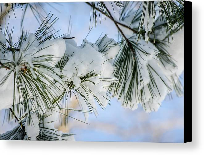 Landscape Canvas Print featuring the photograph Snowy Branch by Melinda Weir