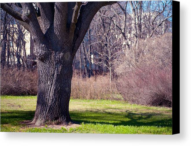 Spring Canvas Print featuring the photograph Soft Rosy Spring In The Garden by Jenny Rainbow