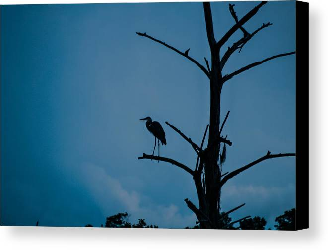 Bird Canvas Print featuring the photograph Solitary by Isaac Golding