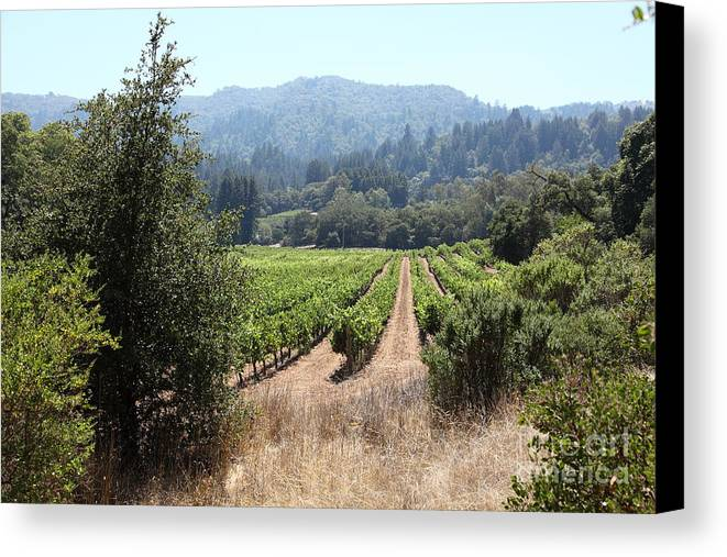 Wingsdomain Canvas Print featuring the photograph Sonoma Vineyards In The Sonoma California Wine Country 5d24516 by Wingsdomain Art and Photography