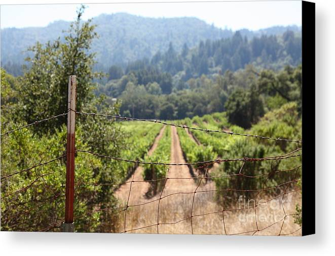 Vineyard Canvas Print featuring the photograph Sonoma Vineyards In The Sonoma California Wine Country 5d24521 by Wingsdomain Art and Photography