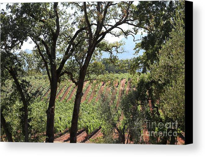Vineyard Canvas Print featuring the photograph Sonoma Vineyards In The Sonoma California Wine Country 5d24622 by Wingsdomain Art and Photography