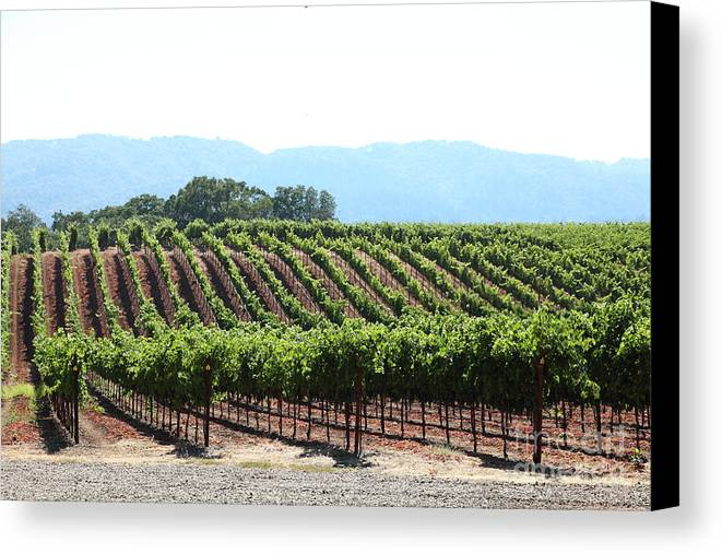 Vineyard Canvas Print featuring the photograph Sonoma Vineyards In The Sonoma California Wine Country 5d24625 by Wingsdomain Art and Photography