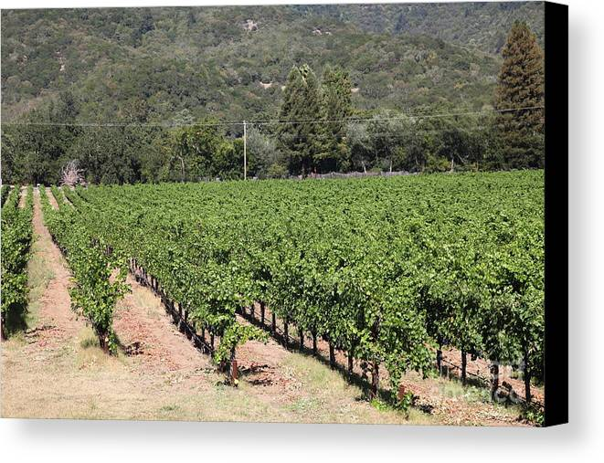 Vineyard Canvas Print featuring the photograph Sonoma Vineyards In The Sonoma California Wine Country 5d24632 by Wingsdomain Art and Photography