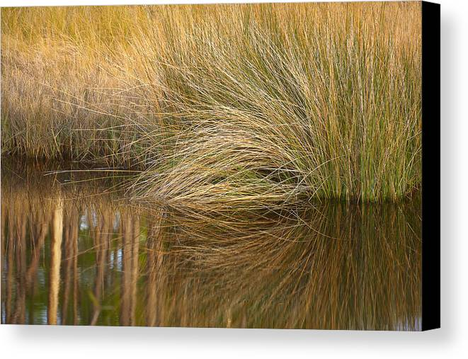 Florida Canvas Print featuring the photograph Spartina Grass by Bill Chambers