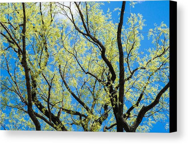 April Canvas Print featuring the photograph Spring Has Come - Featured 3 by Alexander Senin