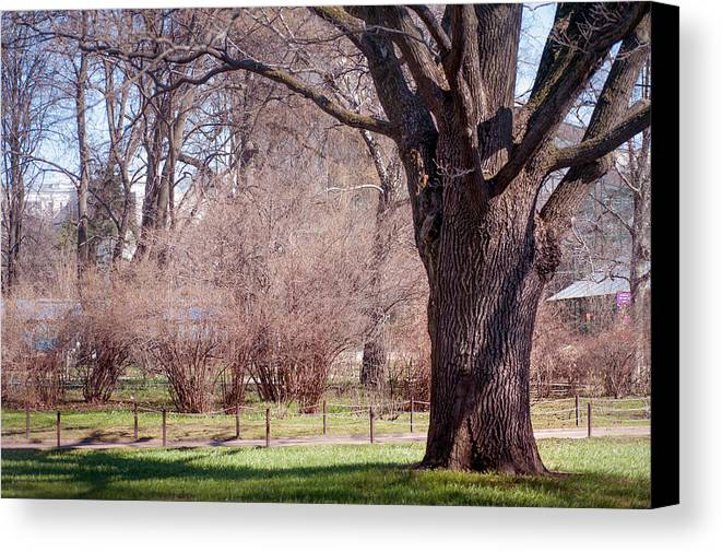 Spring Canvas Print featuring the photograph Spring Tree At Soft Rosy Spring In The Garden by Jenny Rainbow