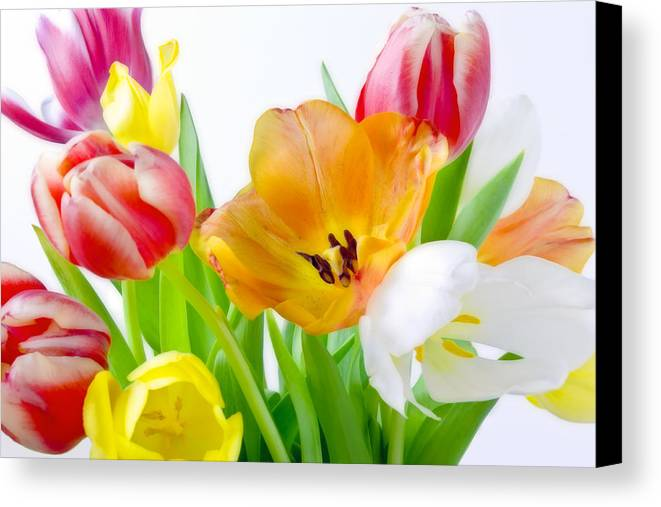 Bright white red orange yellow pink tulips flowers art work all canvas print featuring the photograph bright white red orange yellow pink tulips flowers art work mightylinksfo