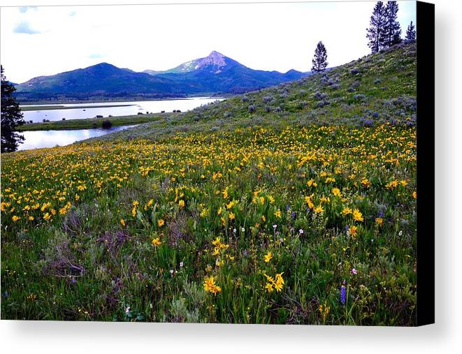 Wildflowers Canvas Print featuring the photograph Steamboat Lake And Mt. Hahn by Gerald Blaine