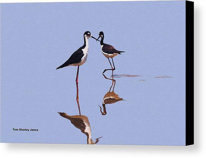Stilts In The Blue Canvas Print featuring the photograph Stilts In The Blue by Tom Janca