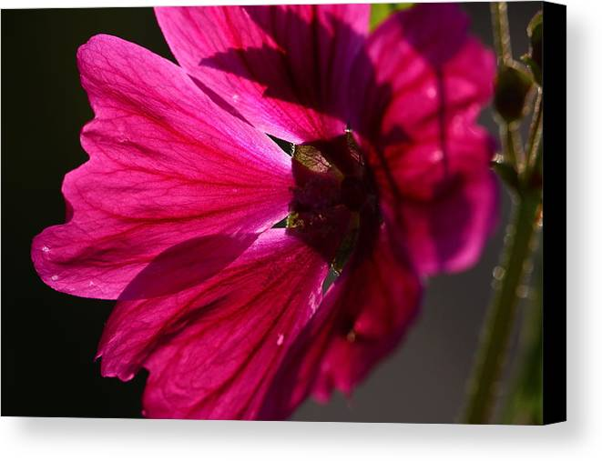 Nature Canvas Print featuring the photograph Summer Impressions by Heike Hultsch