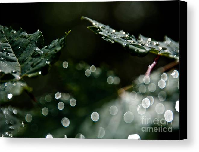 Leaves Canvas Print featuring the photograph Sun After The Rain by Cheryl Baxter