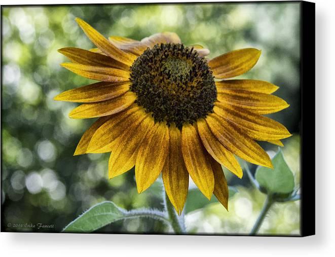 Sunflower Canvas Print featuring the photograph Sunflower Bokeh by Erika Fawcett