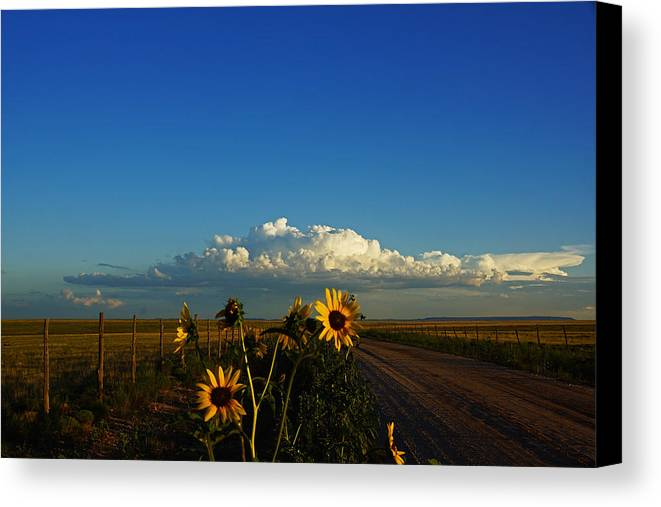 Sunflowers Canvas Print featuring the photograph Sunflower Views by Julie Carter