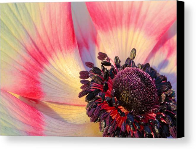 Abstract Canvas Print featuring the photograph Sunlight Just Right by Heidi Smith