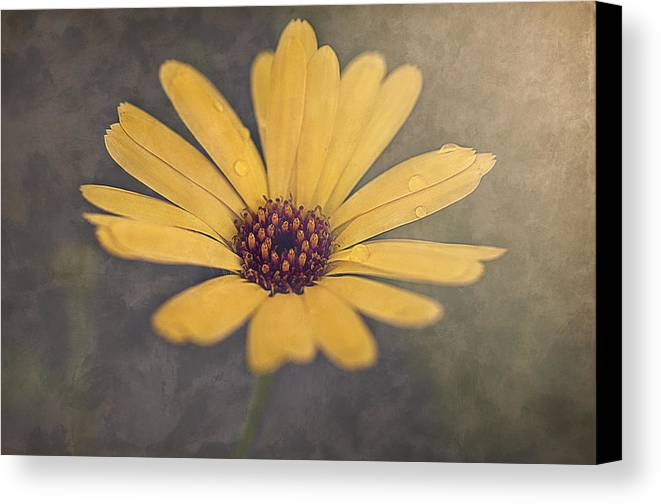 Yellow Canvas Print featuring the photograph Sunny by Faith Simbeck