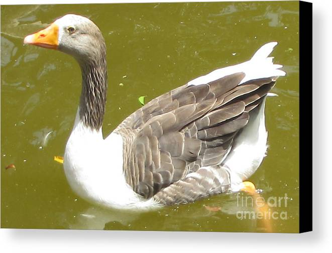 Swan Animals Canvas Print featuring the photograph Swan by Bozena Simeth