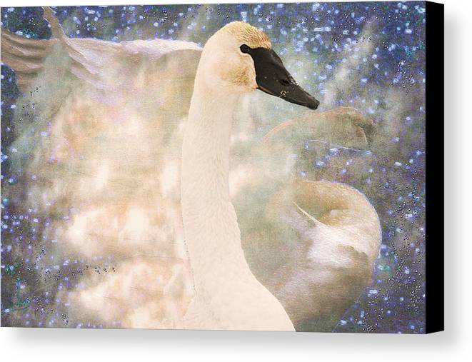 Bird Canvas Print featuring the photograph Swan Journey by Kathy Bassett