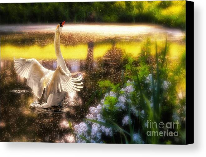 Swan Canvas Print featuring the photograph Swan Lake by Lois Bryan