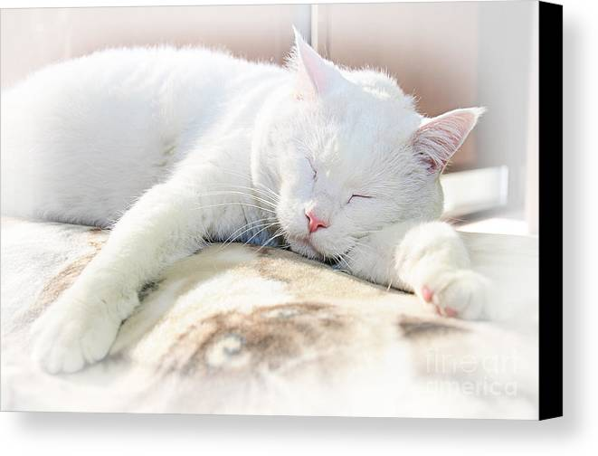 Andee Design Cats Canvas Print featuring the photograph Sweet Dreams by Andee Design