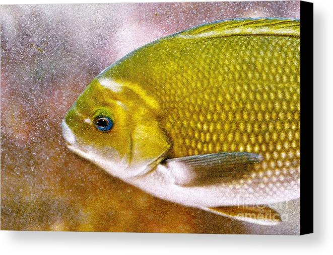 Fish Picture Canvas Print featuring the photograph Swimming Fish by Artist and Photographer Laura Wrede