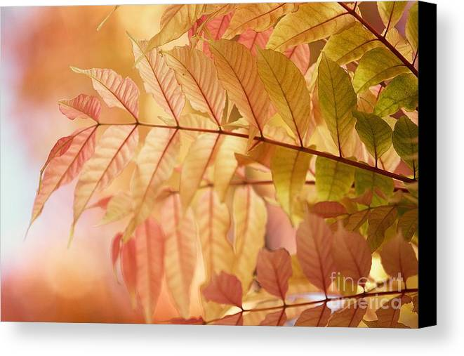 Leaves Canvas Print featuring the photograph Symphony by Andrew Brooks
