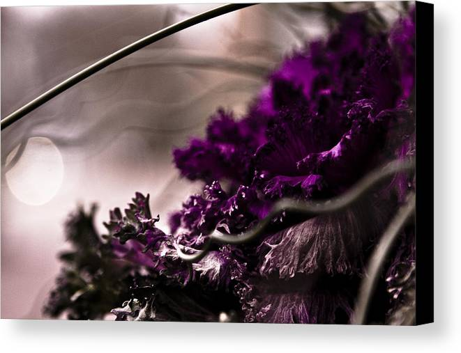 Macro Photography Canvas Print featuring the photograph Tendrils by Jacin Buchanan