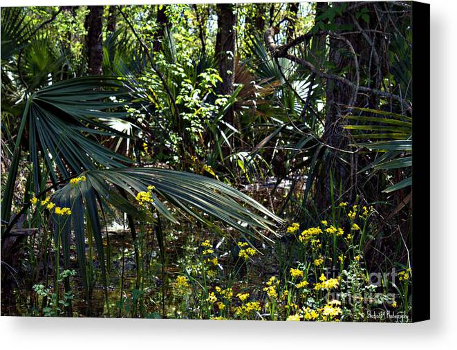 Green Canvas Print featuring the photograph The Bayou by Timothy Bell