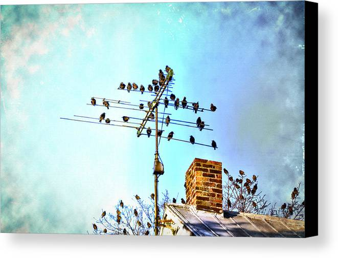 The Birds Canvas Print featuring the photograph The Birds by Bill Cannon