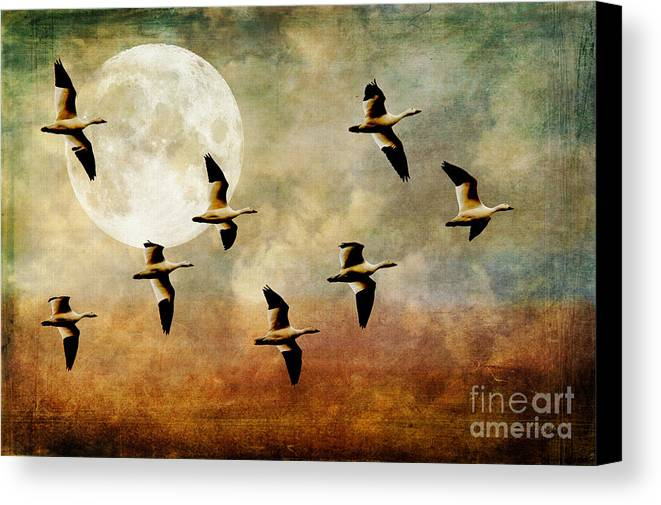 Geese Canvas Print featuring the photograph The Flight Of The Snow Geese by Lois Bryan