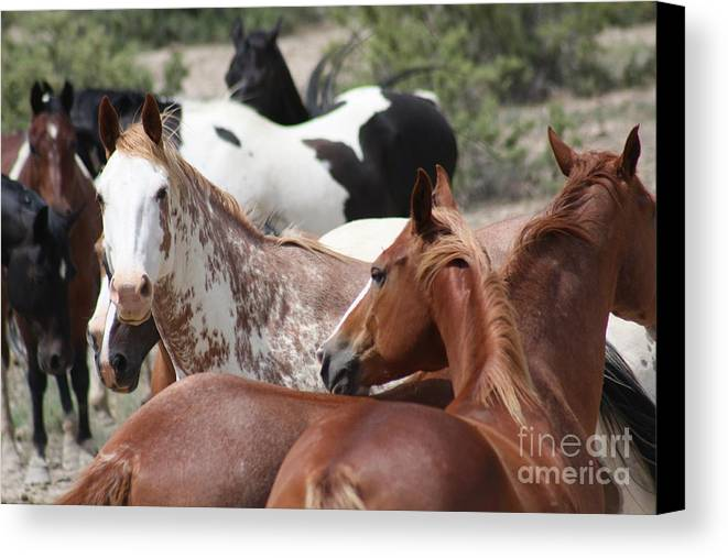 Horses Canvas Print featuring the photograph The Gang by Brandi Maher