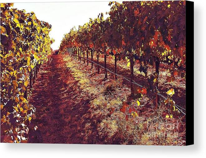 Winery Canvas Print featuring the photograph The Grapes Of The Wine Country by Amy Delaine