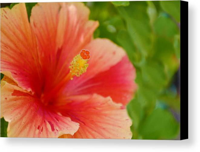 Hibiscus Canvas Print featuring the painting The Lonely Flower by Anton Joseph