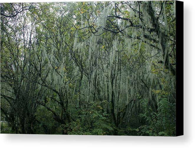Aerial Canvas Print featuring the photograph The Mystery Forest. by Yaacov Herling