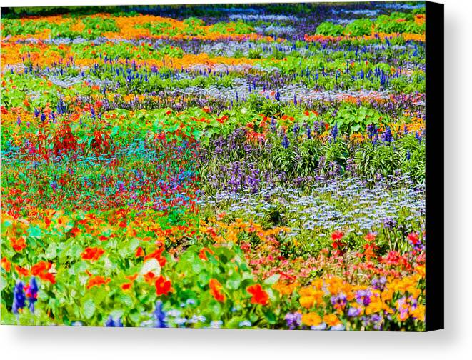 Field Of Flowers Canvas Print featuring the photograph The Resort For Insects by Yevgeni Kacnelson