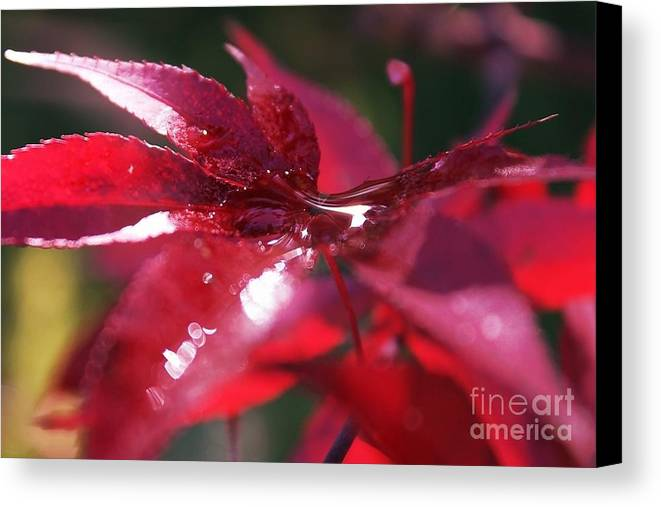 Leaves Canvas Print featuring the photograph The Trickling Droplets After The Rain by Amy Delaine