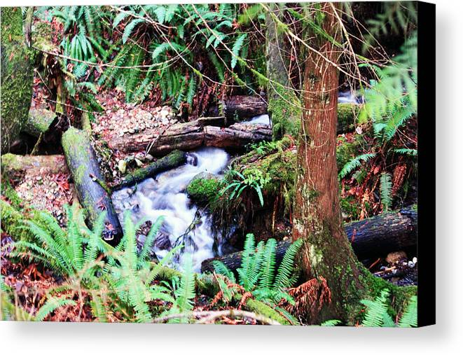 Creek Canvas Print featuring the photograph The Unknown Creek by Edward Hawkins II