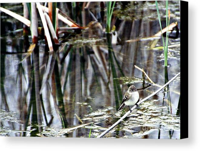 Ruby-crowned Kinglet Birds Canvas Print featuring the photograph The Watch by Elizabeth Winter